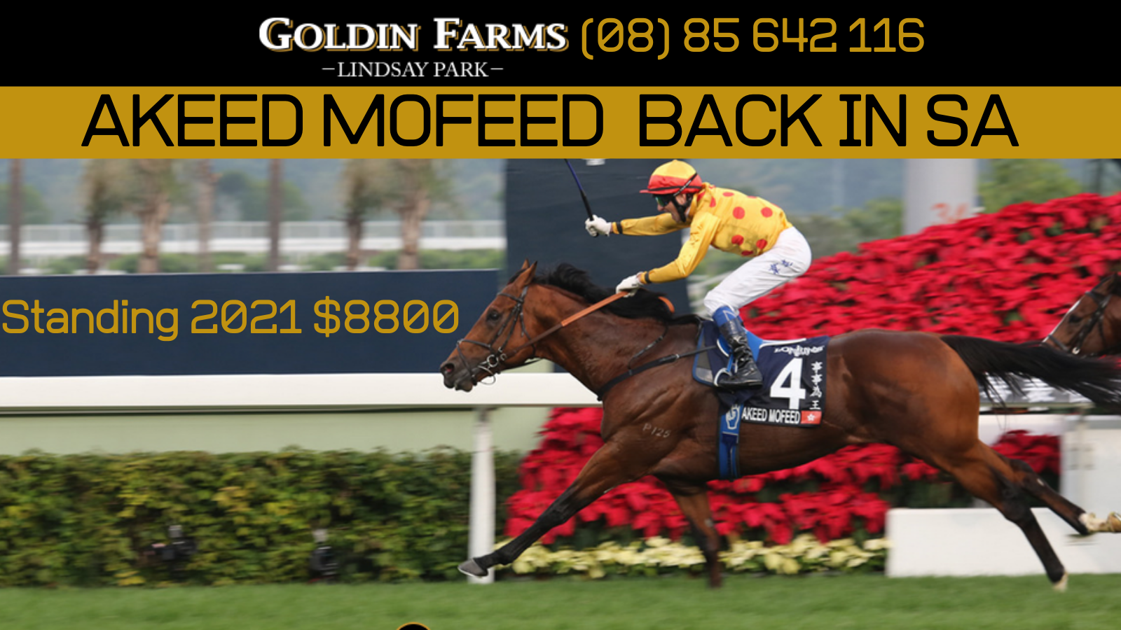 Akeed Mofeed returns to SA in 2021