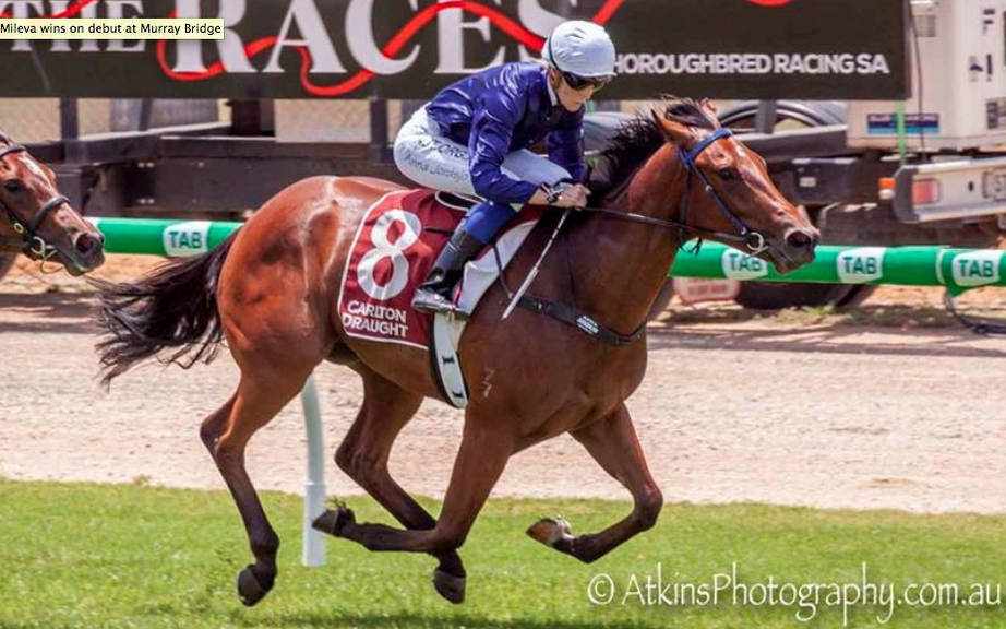 Star 3yo filly stays in SA hands but changes stables
